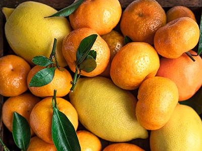 Citrus Grove Irrigation