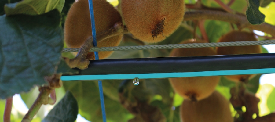 Toro's drip irrigation solutions help growers of vegetables, field crops, orchards and vineyards realize substantial benefits in yield