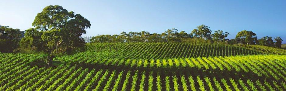 Applicazioni toro ag irrigazione vigneto drip in pc for Irrigazione vigneto