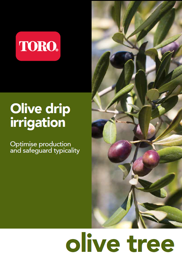 Photo Olive drip irrigation